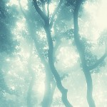 forrest-misty-light