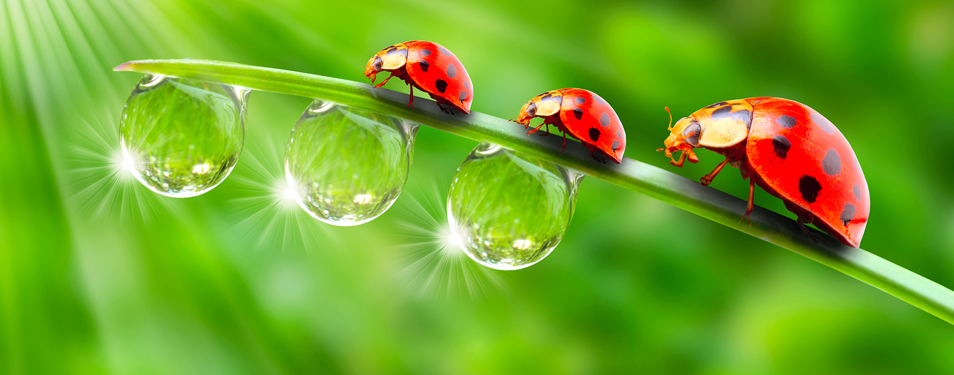 The Lady Bug Phenomenon